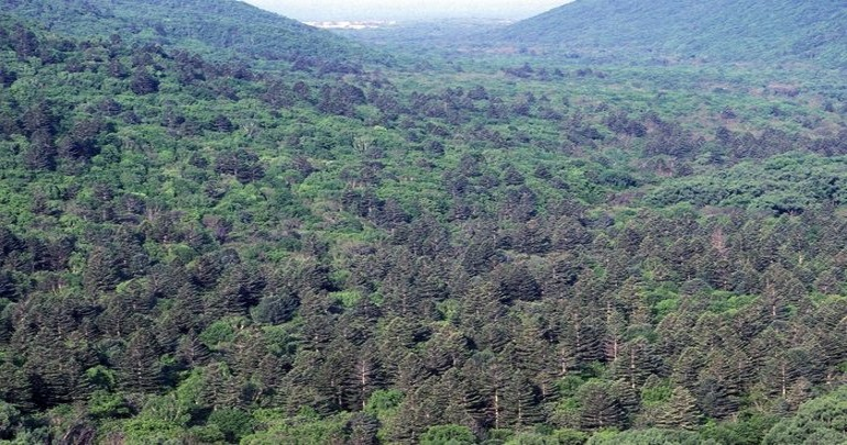 Amendments to the Law on Far Hectare